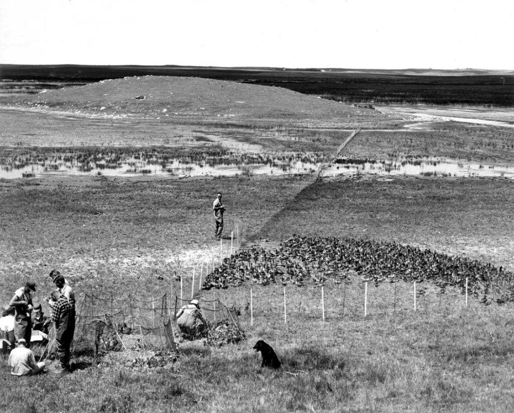 Biologists conducting the annual waterfowl survey in Saskatchewan.