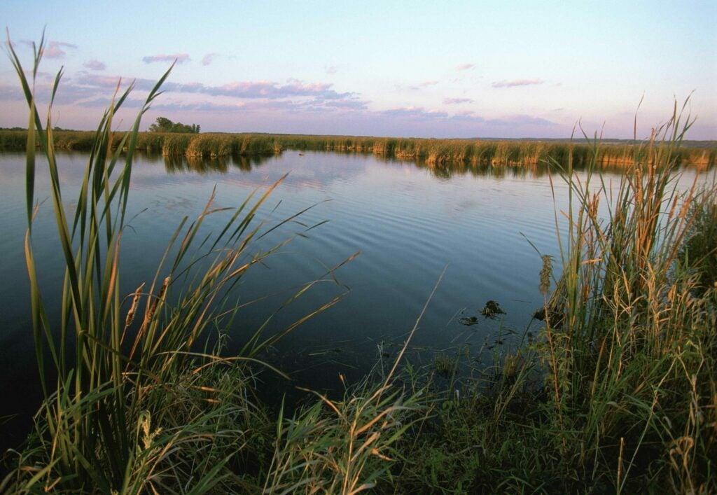 wetland 30 by 30