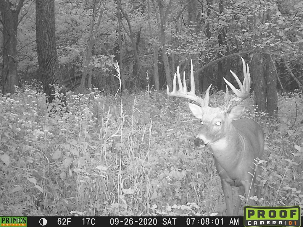 A big whitetail buck on a Primos trail camera, taken in late September.