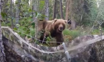 """""""Whoa Bear. Get Outta Here."""" How to Talk Your Way Out of a Dangerous Wildlife Encounter"""