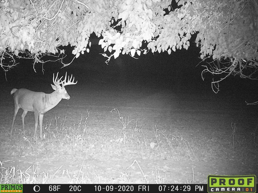 A big whitetail buck photographed on a trail camera at night.