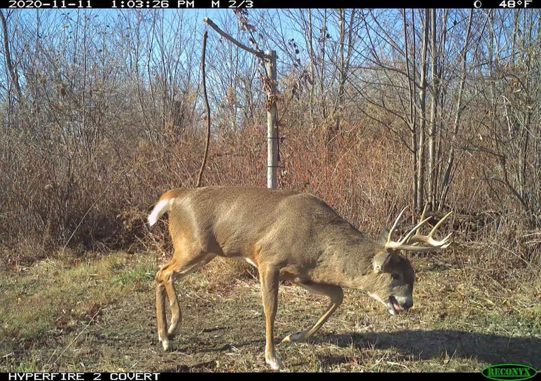 A Wisconsin bull-headed brute.