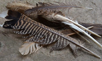 8 Wild Game and Fish Parts That Will Fertilize Your Garden