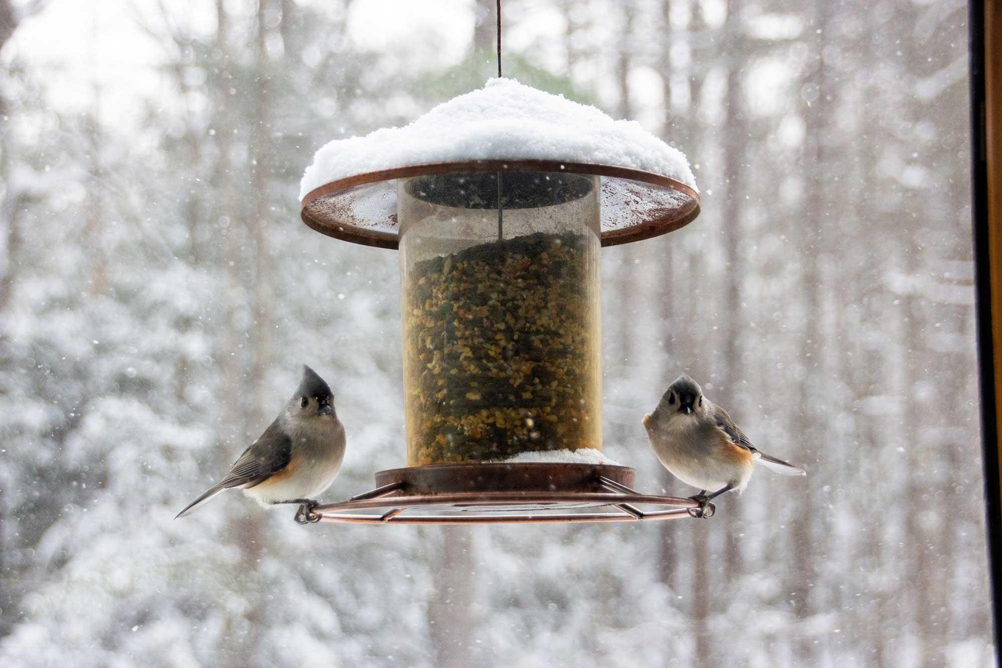 Birds at a bird feeder eating the best bird seed