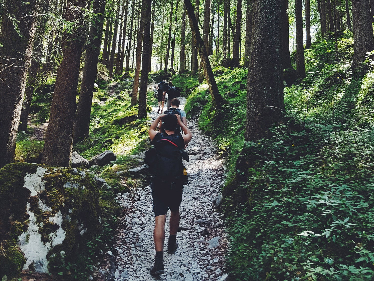 A group of people hiking through a lush, green wilderness trail, some wearing the best men's hiking shoes.