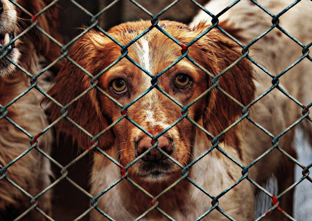 Shelter dogs are a good option for those who can't afford a well-bred dog.