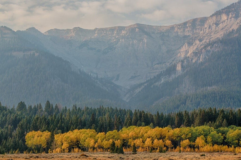 Golden trees and evergreens at the base of a steep mountain range.