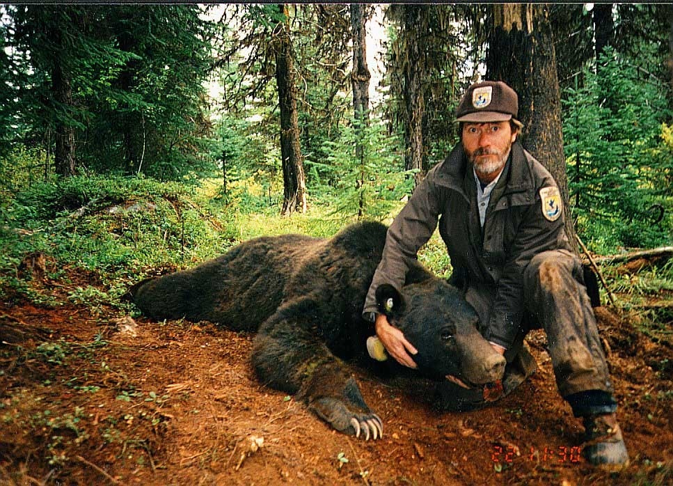 A USFWS employee holds the head of an adult male grizzly, a species that has recovered in the lower 48.