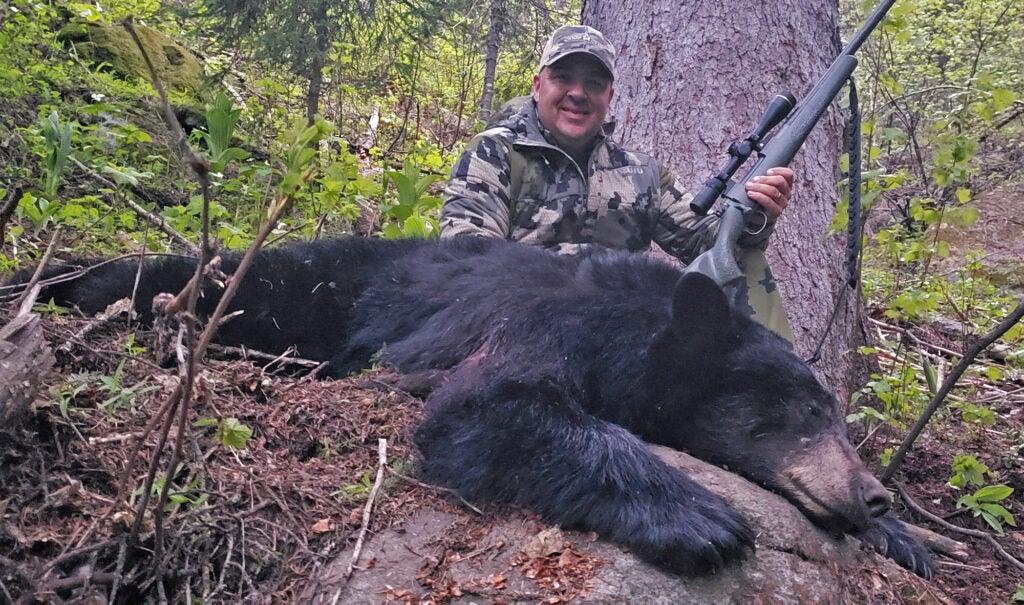 Idaho black bear