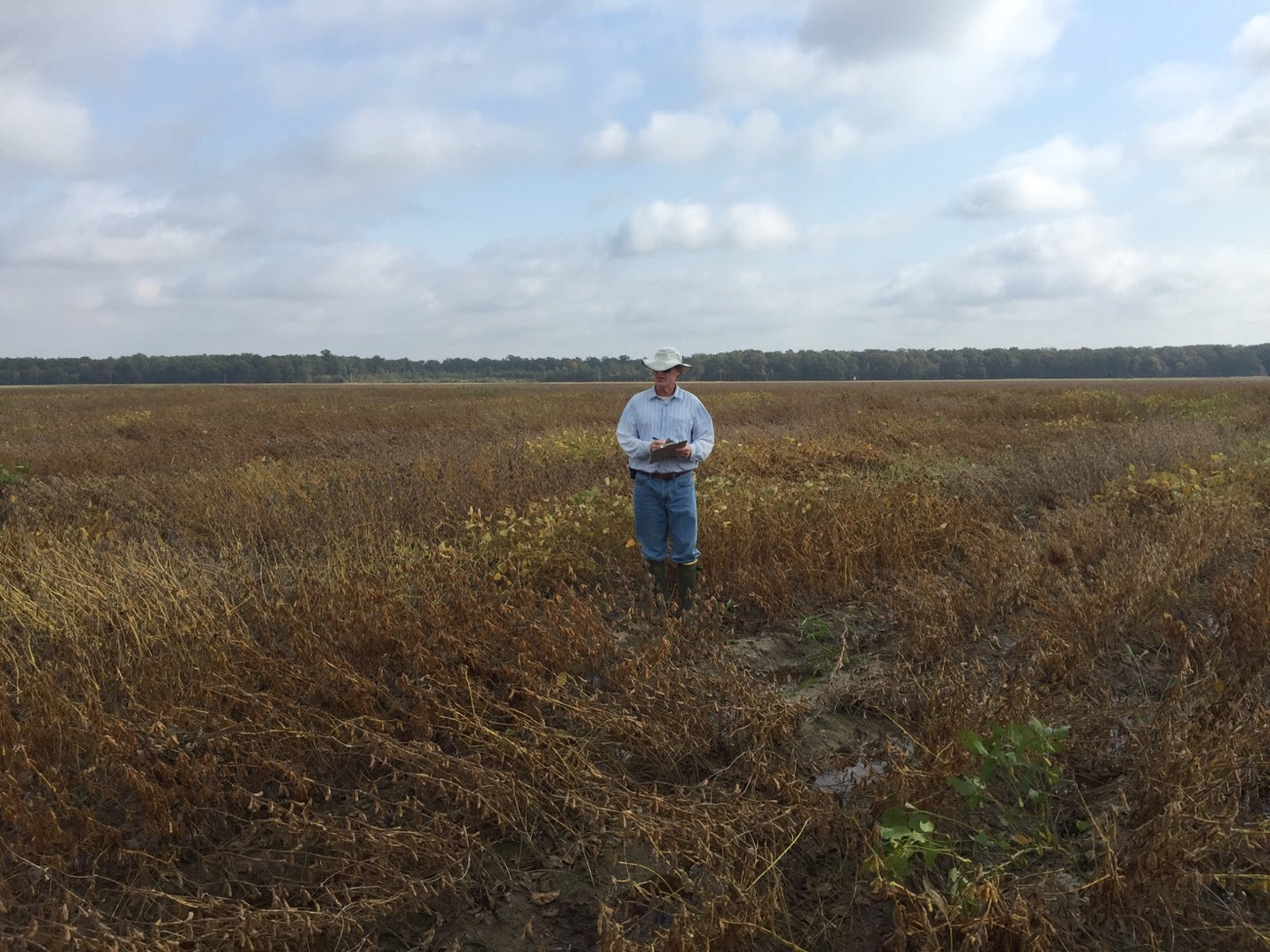 A technician examines wind damage to crops at Pine Tree Research Station, a property the University of Arkansas is trying to sell.