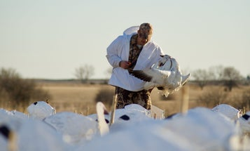 How to Be a Casual (and Ethical) Snow Goose Hunter
