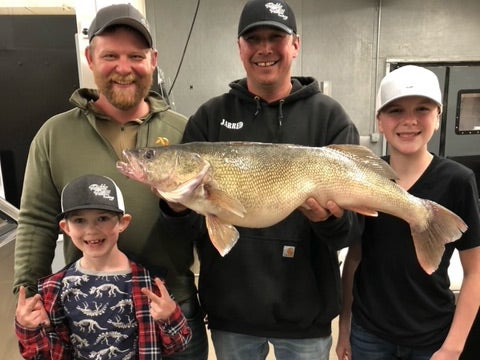 An angler holds up a large walleye.