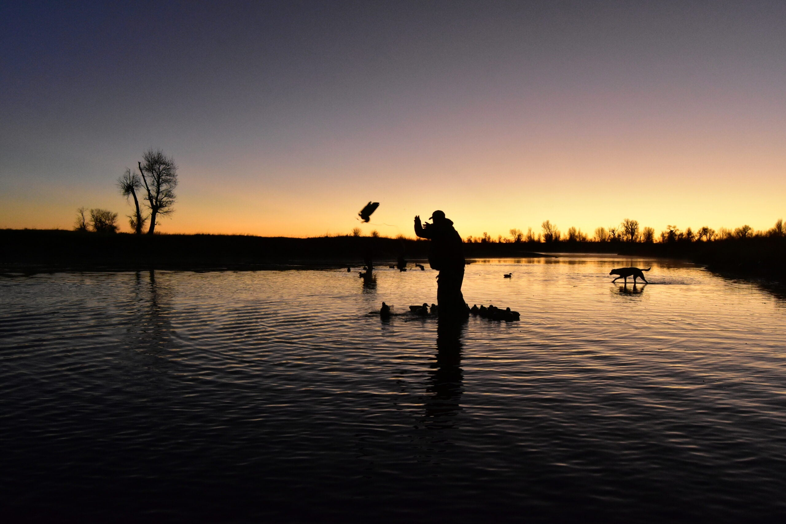 A duck hunter tosses out decoys in the pre-dawn light.