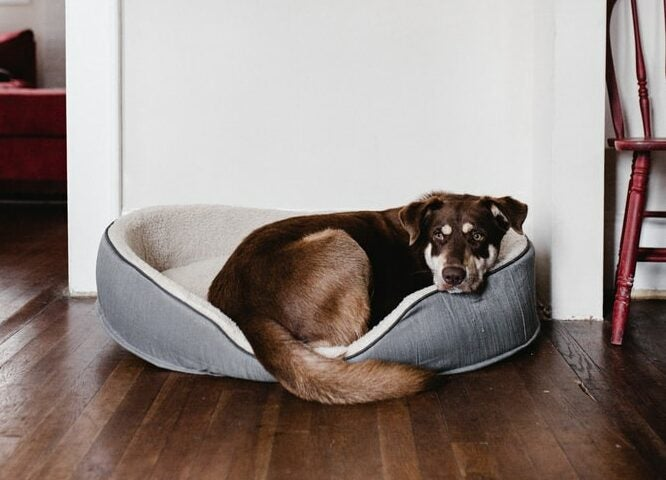 Dog lying in a dog bed.