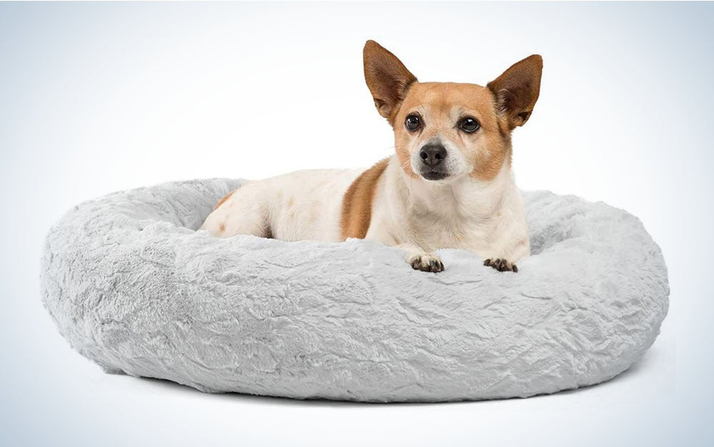 small dog in dog bed