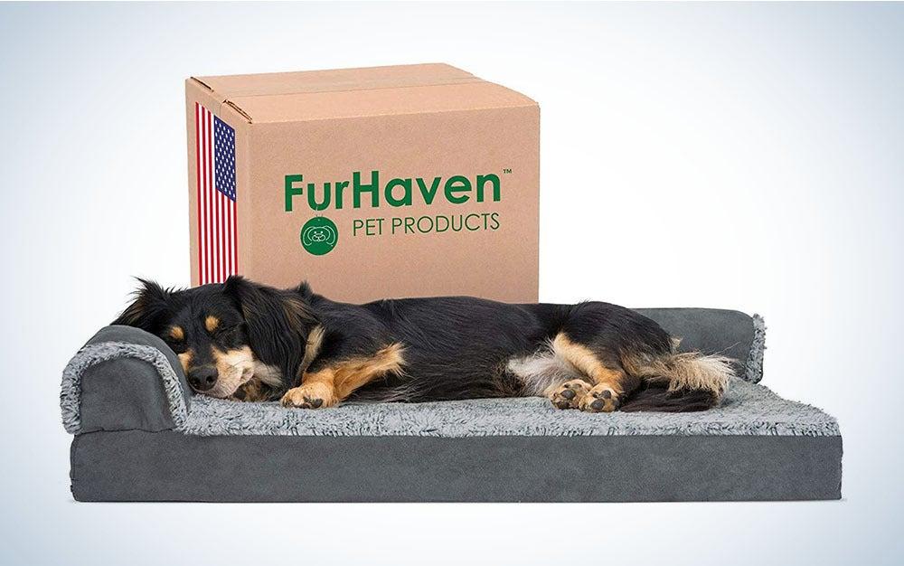 Dog sleeping in a dog bed