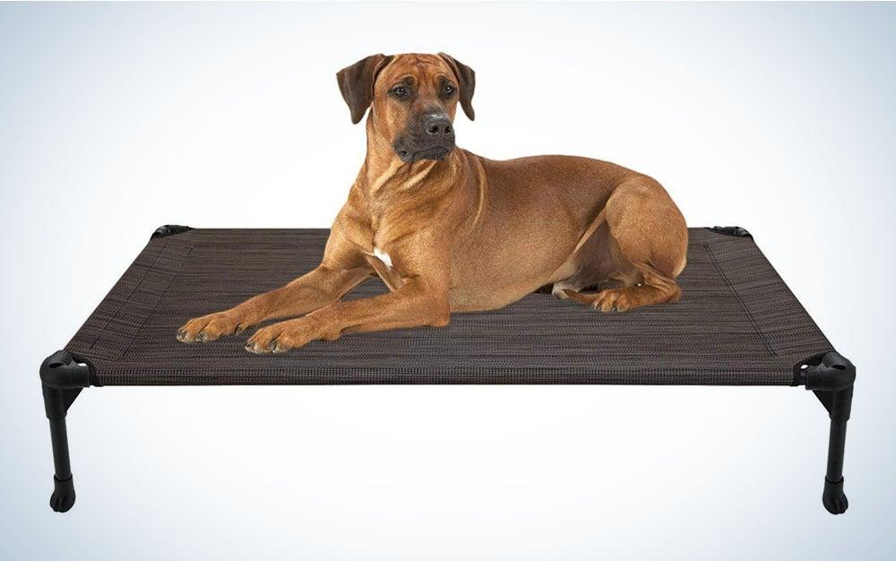 dog lying on elevated dog bed