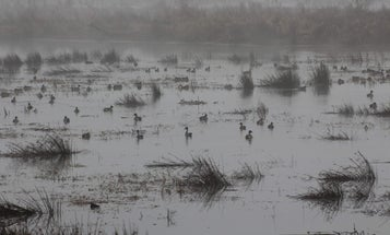 Botulism, Drought, Ag, and Politics Threaten Water—and Waterfowl—on California Refuges