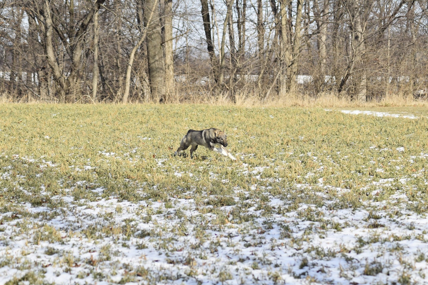 If you buy a high-drive gun dog you have to be prepared to train and car for it properly.