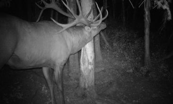 Podcast: The Story of the New World Record, Nontypical Elk