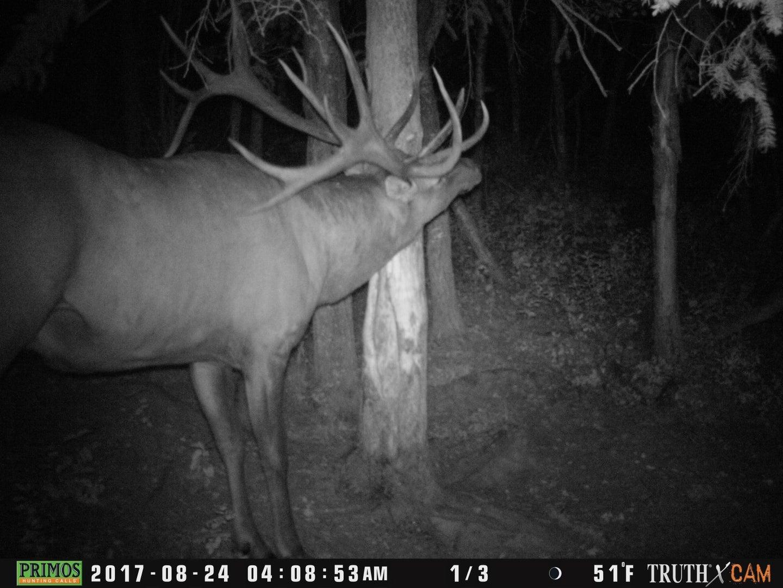 The trail camera photo of the world record archery bull elk.