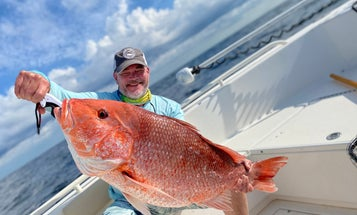 Red Snapper Quotas for the Gulf Coast Will Likely Be Restricted, Even After Optimistic Population Estimates