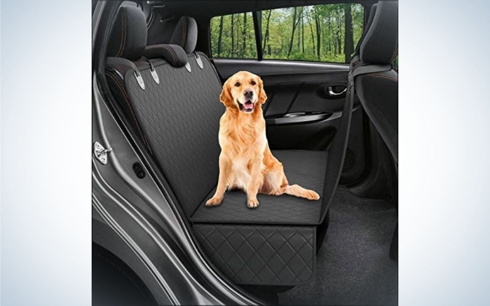 A beige dog staring and seating in back car seat black covers.