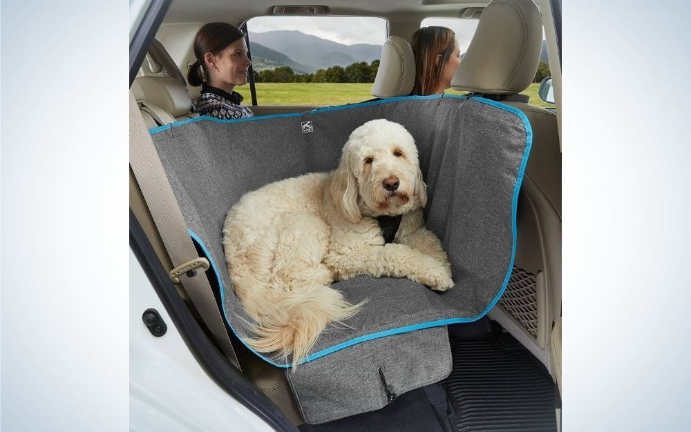 A big white dog standing at the back car seat over a grey cover for dogs.