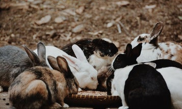 Picking the Best Rabbit Food: What to Feed Rabbits to Keep Them Healthy and Happy