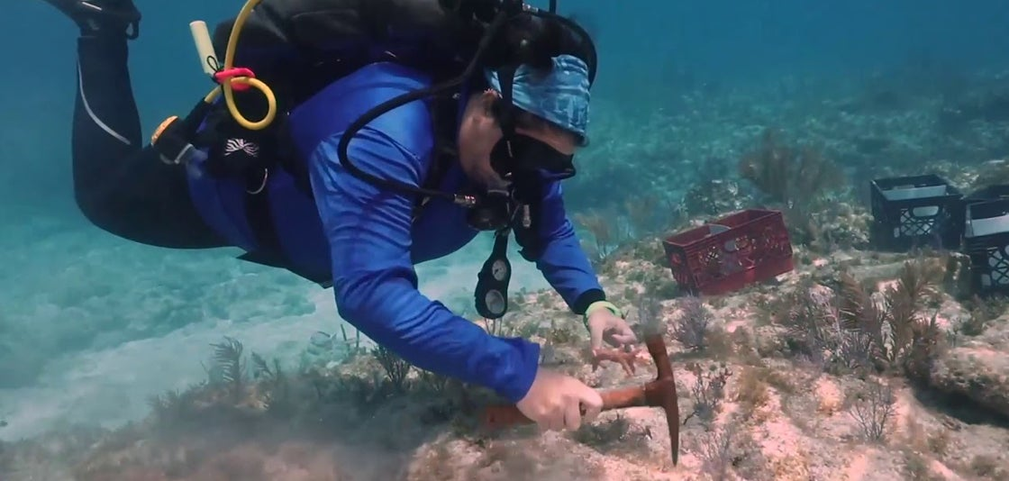 Diver works on reef restoration in the Florida Keys for Earth Day.