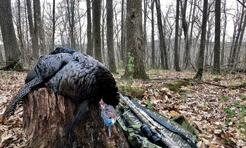 Yes, Turkey Hunting Without Decoys Can Help You Kill More Gobblers