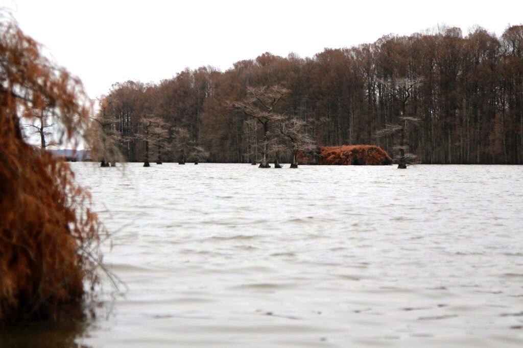 Blind 58 and David Vowell's blinds on Reelfoot Lake, TN.
