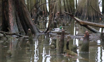 What Really Happened to the Duck Hunters Who Were Killed on Reelfoot Lake?