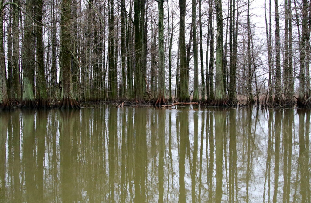 The Bayou Du Chien on Reelfoot Lake, near where David Vowell was found.