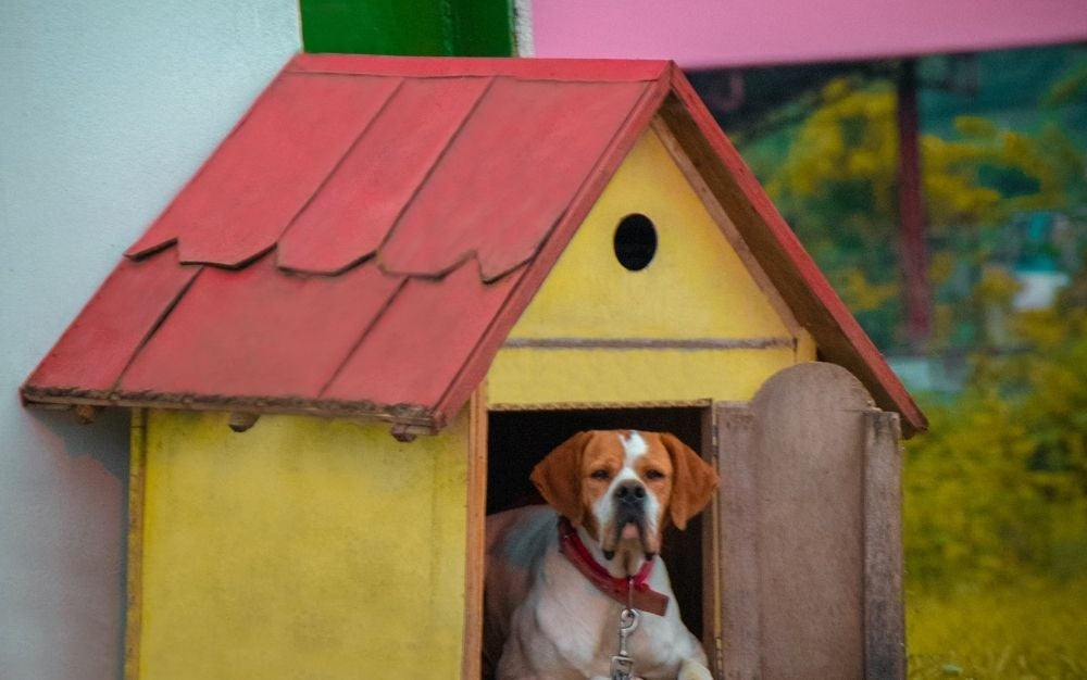 A big dog with brown head resting in an outdoor dog house with yellow wooden walls and red roof.