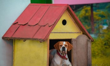 Choose The Best Dog House For Your Best Friend