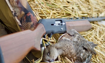 The Beretta A390 Silver Mallard Was the Best 3-Inch Semiauto Shotgun Ever Built