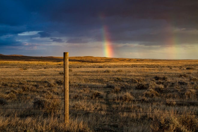 $6.4 Million Grant to Improve Montana Upland Bird and Big Game Habitat
