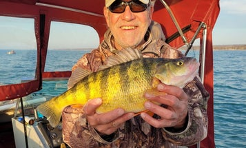 There's a New Pennsylvania State-Record Yellow Perch, and It Weighs 3 Pounds