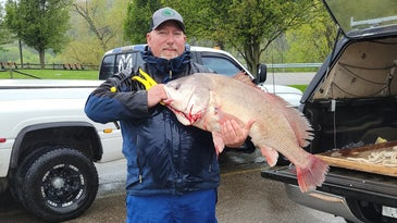 The new West-Virginia state-record drum weighed close to 30 pounds.