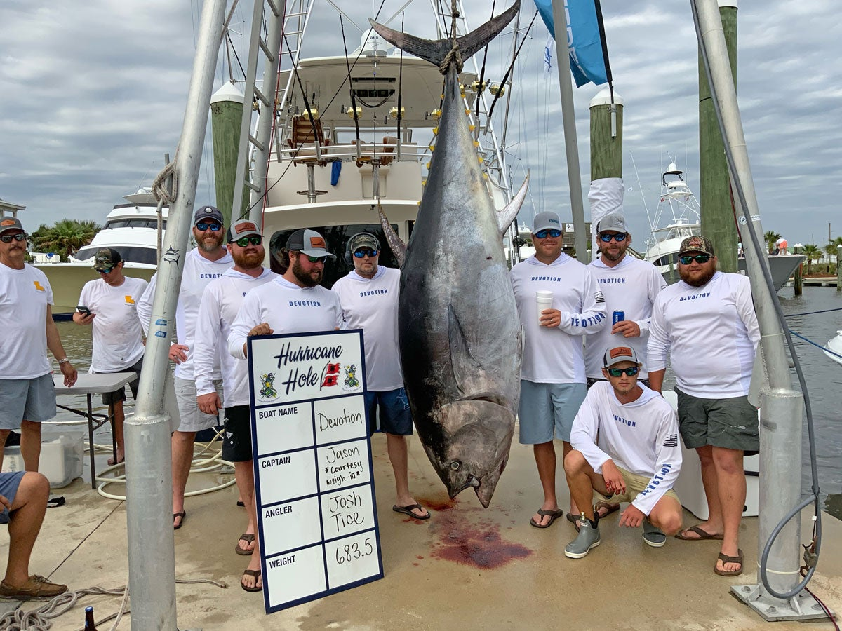 A Louisiana bluefin tuna weighing in at 683 pounds.
