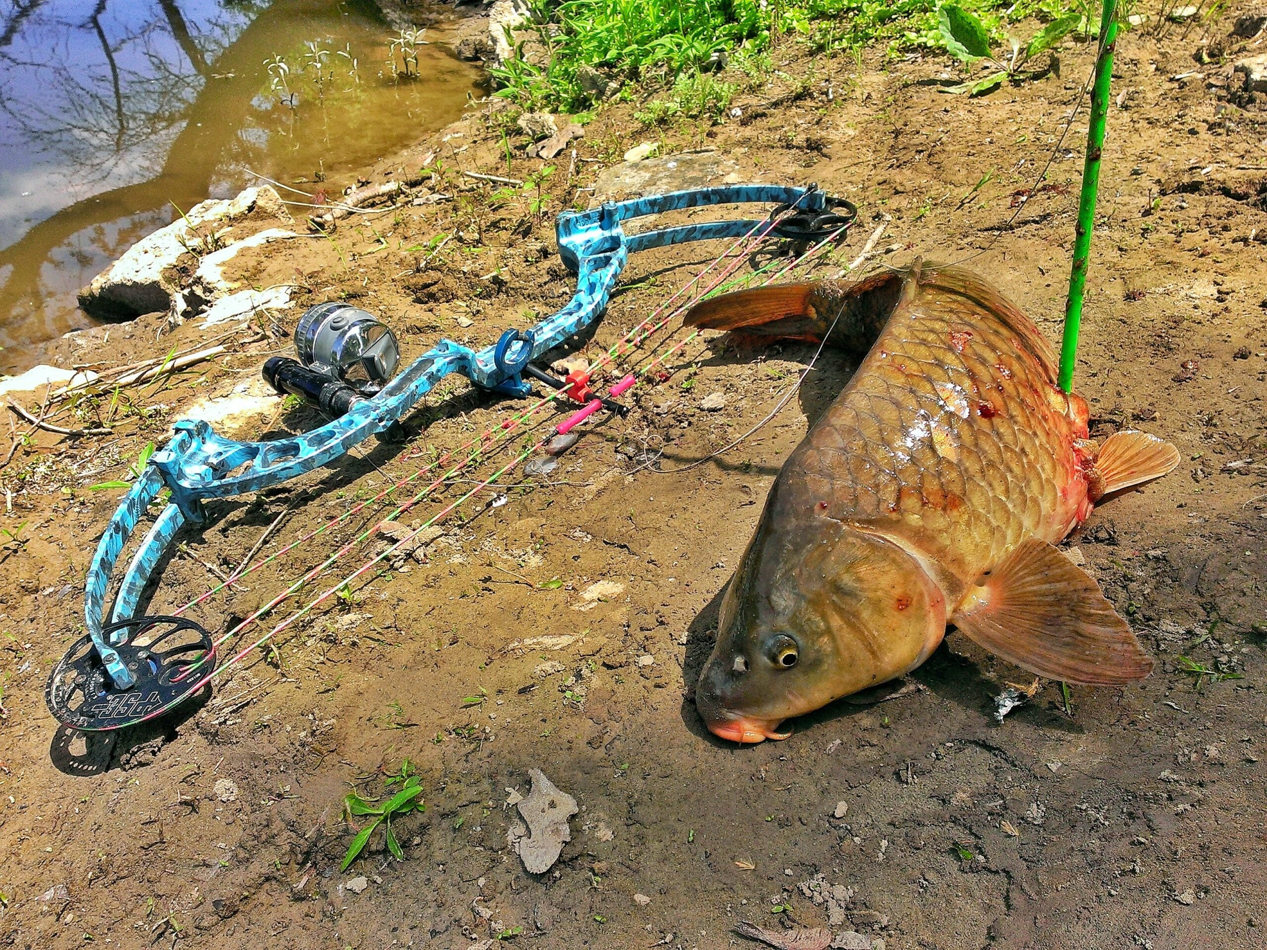Knowing where the fish you're targeting live, makes hunting them easier.