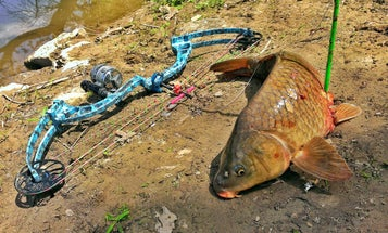How to Target Four Different Species When You're Bowfishing