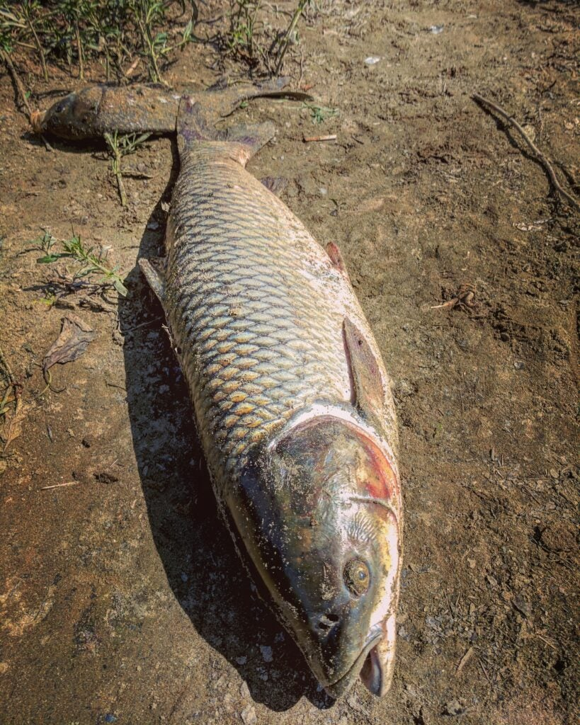 Target grass carp from the banks of lakes and ponds.