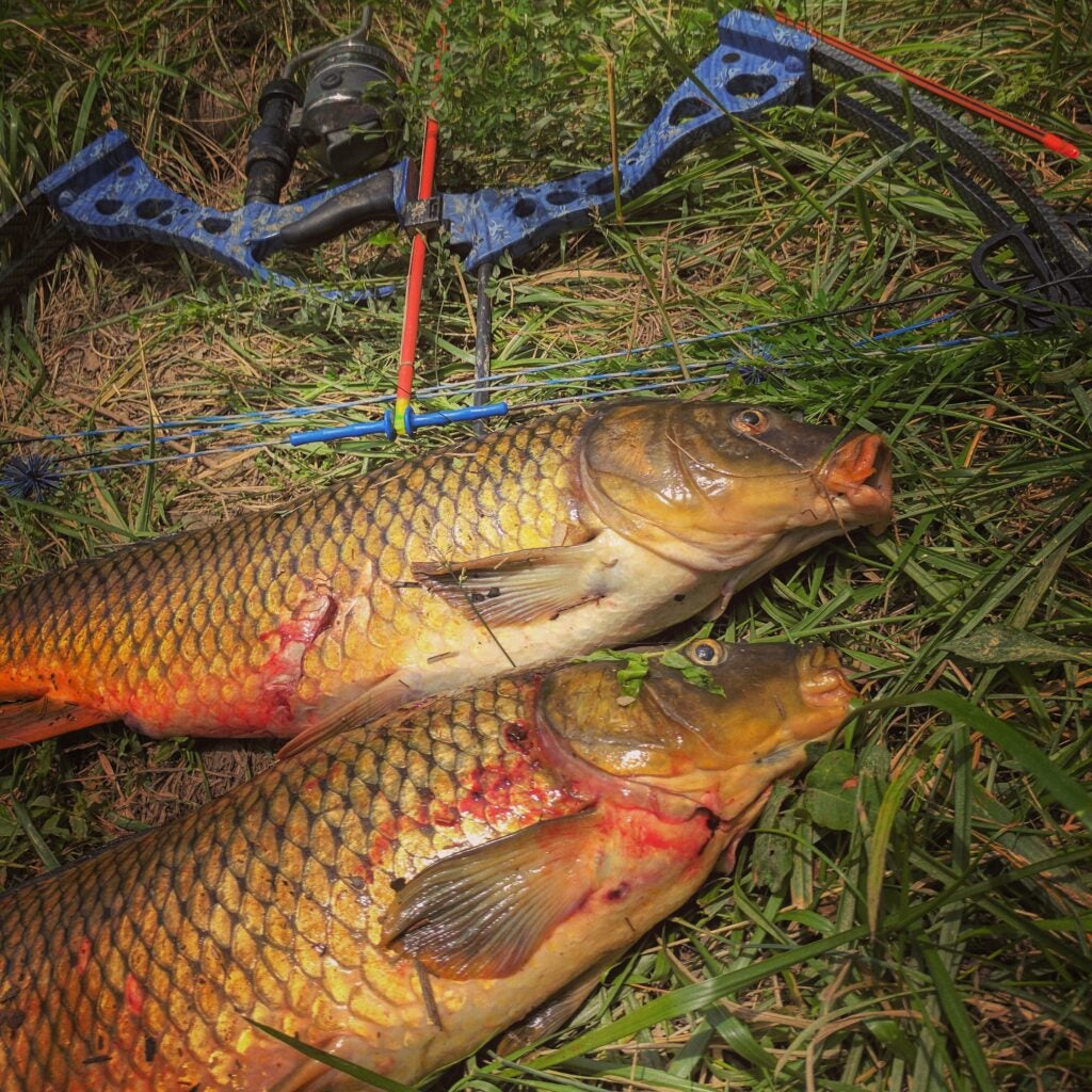 Common carp can be found in nasty/muddy waters.