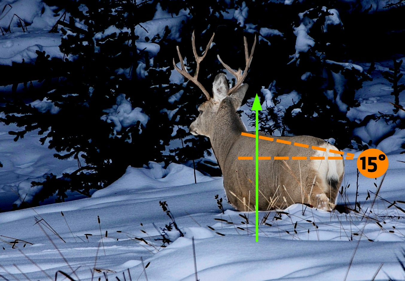 The difference between an entry wound and exit wound when considering shot placement on a mule deer.