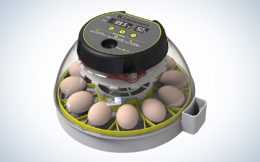 A machine with black motor to work in the middle of it and with a line of eggs near to each other into the low part of egg incubator.