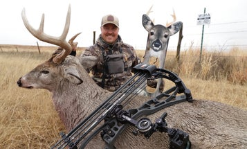 Can You Really Stalk Within Bow Range of a Mature Whitetail Buck?