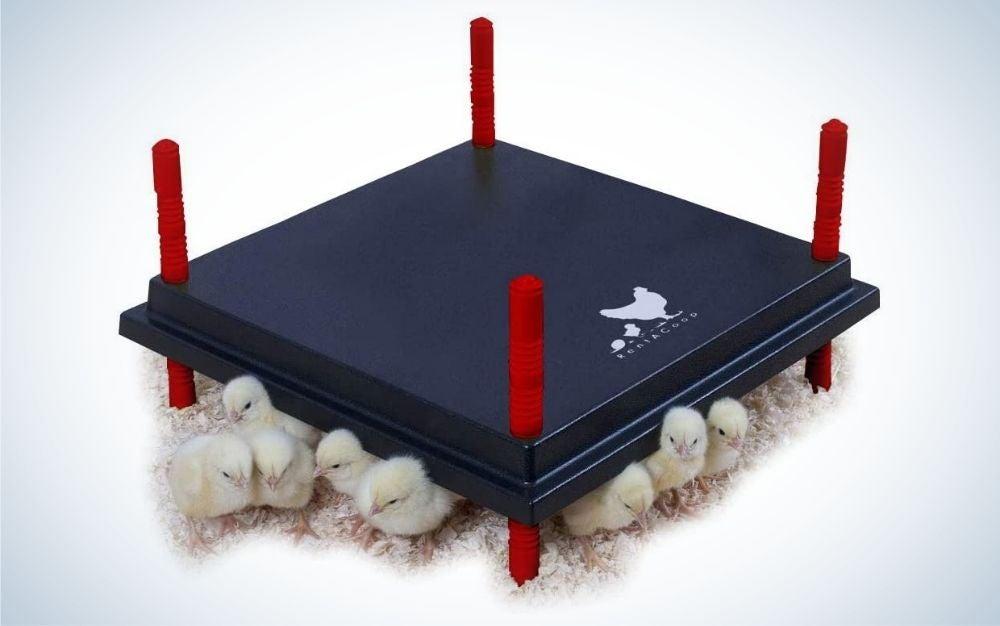 Dark blue chicken coop heater with height adjustable sticks