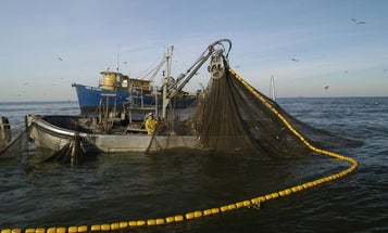 New Louisiana Bill Seeks to Restrict Commercial Purse-Seine Netting of Menhaden Near the Coast